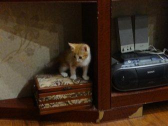 Новое foto Отдам даром Отдам замечательного рыжего котенка 33469515 в Рязани