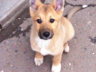Просмотреть фотографию Продажа собак, щенков отдам в хорошие руки 34334792 в Рязани
