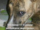 Фотография в Потерянные и Найденные Потерянные В районе ростовского моря пропал молодой в Ростове-на-Дону 0