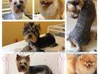 Foto в   Стрижка взрослых собак 750-1000 руб. ( в в Ростове-на-Дону 500