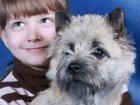 Фотография в   Эта порода отважна, дружелюбна, ладит с детьми в Ростове-на-Дону 30000