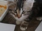 Фотография в Отдам даром - Приму в дар Отдам даром Отдадим котят в добрые руки 1 мальчик и 2 в Ростове-на-Дону 0