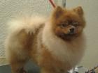 Увидеть foto Стрижка собак Стрижка собака и кошек разных пород и размеров, 39649897 в Ростове-на-Дону