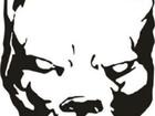Скачать изображение  ищем жениха для вязки в ростове на дону 39675666 в Ростове-на-Дону