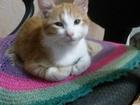 Уникальное foto Отдам даром - приму в дар Отдам даром котят в добрые руки 67824110 в Ростове-на-Дону