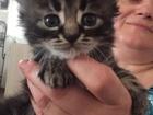 Увидеть фото Отдам даром - приму в дар Отдам в добрые руки котят (мальчиков) 67861760 в Ростове-на-Дону