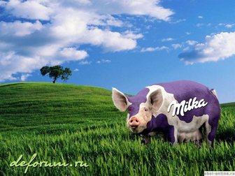 Увидеть фотографию Другие животные свиньи 34599558 в Ростове-на-Дону