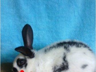 Увидеть фотографию  продаю крольчат 35286563 в Ростове-на-Дону