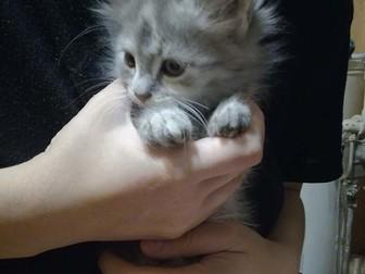 Просмотреть foto Отдам даром - приму в дар Милые игривые котики ищут хозяев 66486118 в Ростове-на-Дону