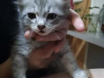 Смотреть фото Отдам даром - приму в дар Милые игривые котики ищут хозяев 66486118 в Ростове-на-Дону
