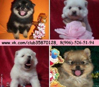 Фото в Собаки и щенки Продажа собак, щенков В продаже очень замечательные щеночки! Порода в Рыбинске 0
