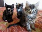 Новое фотографию Отдам даром - приму в дар Чудесных котят в хорошие руки 32355338 в Самаре