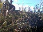 Скачать бесплатно фото Другие строительные услуги Спил деревьев 32734707 в Самаре