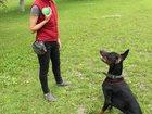 Фото в Собаки и щенки Продажа собак, щенков У вас есть собака?  Вы сталкивались с:   в Самаре 0