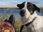 Фото в Собаки и щенки Вязка собак Ищу подружку :О себе зовут Тайсон 1. 7 л в Самаре 1000