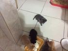 Просмотреть foto  Отдам даром котят бесплатно в добрые руки 45338540 в Самаре