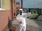 Новое foto  уничтожение клопов, тараканов, муравьев 32487996 в Тюмени