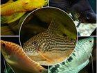 Фотография в Рыбки (Аквариумистика) Купить аквариум Продам аквариум, 25 литров куплен в 2014г в Санкт-Петербурге 4000