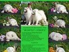 Изображение в Собаки и щенки Продажа собак, щенков Продаются щенки Самоеда!   Здоровые, красивые в Санкт-Петербурге 0