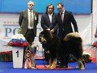 Фотография в Собаки и щенки Продажа собак, щенков 4 кобеля и 1 сука. рождены 29. 11. 2015. в Санкт-Петербурге 70000