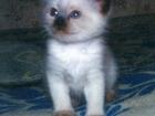 Фото в   Здравствуйте. Возьму в дар котенка девочку. в Санкт-Петербурге 0