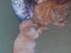 Фото в Отдам даром - Приму в дар Отдам даром Очаровательные котята, возраст 2-3 месяца, в Санкт-Петербурге 0