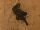 Изображение в Кошки и котята Вязка Молодая беспородная , красивая, чистая кошечка в Санкт-Петербурге 0
