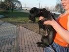 Стрижка собак и кошек, без наркоза