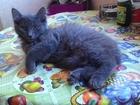 Котенок ищет свой дом и любящих родителей