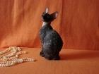 Очаровательные котята породы корниш рекс
