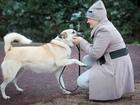 Скачать изображение Отдам даром - приму в дар Умная собака-няня - воспитает и ребенка, и котенка 68497153 в Санкт-Петербурге