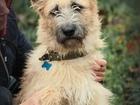 Просмотреть фотографию Отдам даром - приму в дар Ищет дом царь собак - изумительный молодой пёс 68652110 в Санкт-Петербурге