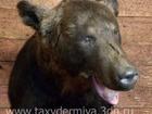 Скачать бесплатно фото  Продам чучело головы медведя 68969222 в Санкт-Петербурге
