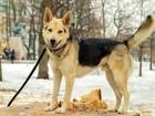Новое изображение Отдам даром - приму в дар Шикарный молодой пёс-акробат 69463406 в Санкт-Петербурге