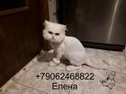 Смотреть изображение Услуги для животных Стрижка кошек Спб Приморский Район 70723935 в Санкт-Петербурге