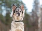 Уникальное изображение Отдам даром - приму в дар Красавица-собака мраморного окраса в дар 73416936 в Санкт-Петербурге