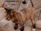 Увидеть foto Услуги для животных Стрижка кошек Спб Приморский район 73670451 в Санкт-Петербурге