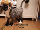 Новое фото Услуги для животных Стрижка кошек Спб Центральный район 73670534 в Санкт-Петербурге