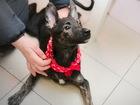 Свежее фото  Красивый небольшой щенок из приюта ищет дом 76210278 в Санкт-Петербурге