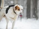 Просмотреть фото  Белый пес, играющий в игрушки 82565960 в Санкт-Петербурге