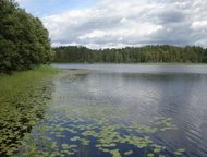 земельный участок 20 сот в днп «7 Озёр» Новгородская область Земельный участок 2