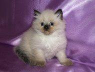 Предлагаем котят Предлагаем очаровательных котят, с хорошими породными данными,