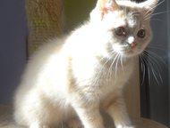 Продаются котята Продаются котята от элитных родителей с отличными родословными.