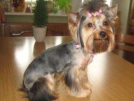 Услуги для животных на дому, стрижка собак и кошек, выезд мастера Стрижка собак