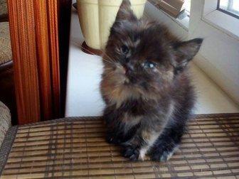 Уникальное foto Отдам даром Отдам котенка в добрые руки 33317286 в Саранске