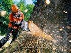 Фотография в Услуги компаний и частных лиц Разные услуги Осуществляем качественный распил, снос деревьев, в Саратове 100