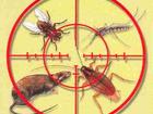 Фотография в Услуги компаний и частных лиц Разные услуги Уничтожение всех видов насекомых, грызунов, в Саратове 500