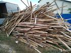 Скачать бесплатно фото Разное опилки сосновые,стружка,дрова т 464221 68257377 в Саратове