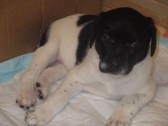 Новое foto Продажа собак, щенков отдам в добрые руки щенков 37383591 в Саратове