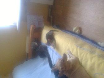 Новое foto Отдам даром отдам котенка от домашней кошки 37614656 в Саратове